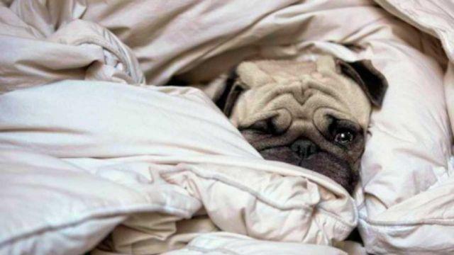 Duvet Days and Hangover Days